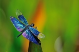 Twinkle The Dragonfly by Ken Klocke