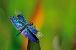 Twinkle The Dragonfly by Ken Klocke